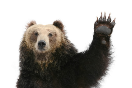 Bear Raising Paw